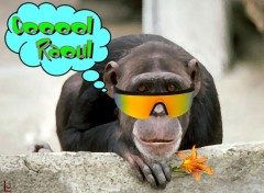 Wallpapers Humor Cool Raoul !