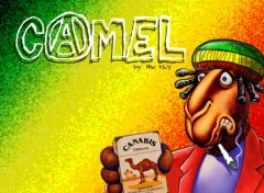 Wallpapers Humor Camel-Rasta