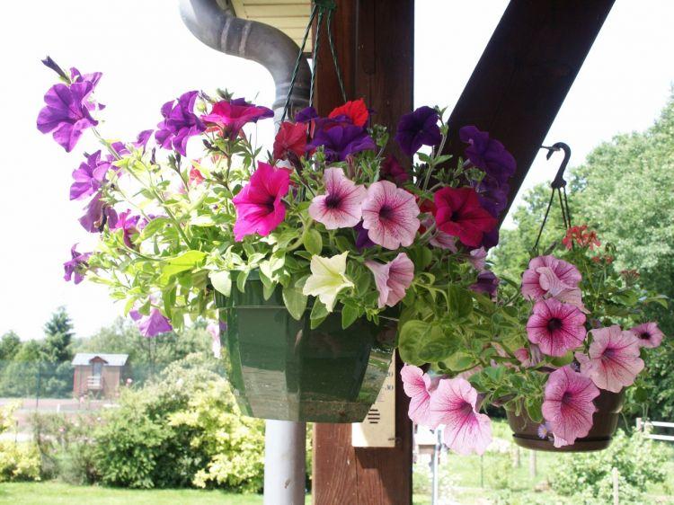 fonds d 39 cran nature fonds d 39 cran fleurs fleurs suspendues par kael. Black Bedroom Furniture Sets. Home Design Ideas