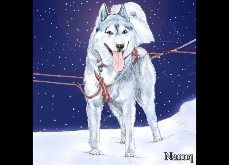 Fonds d 39 cran art crayon fonds d 39 cran animaux - Coloriage chien de traineau ...