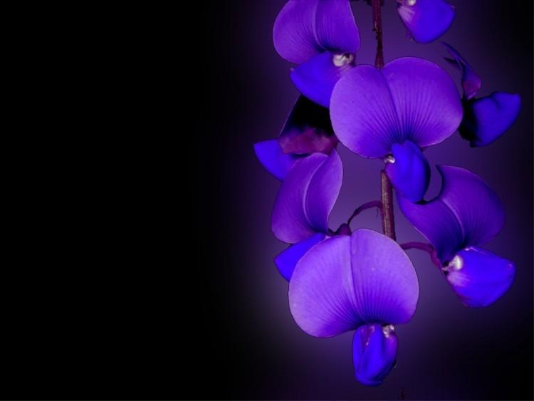 Caractère et personnalité de ceux qui aiment la couleur violette 040811212817_10