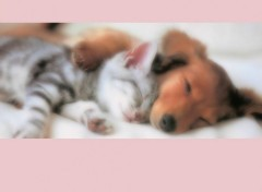 Fonds d'�cran Animaux ---chat&chien---