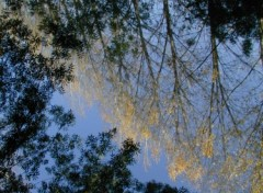 Fonds d'�cran Nature Reflets