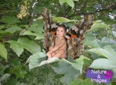 Fonds d'�cran Hommes - Ev�nements Papillon de jour