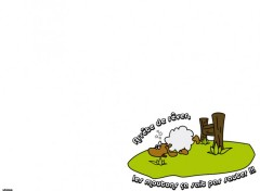 Wallpapers Humor WebSheep