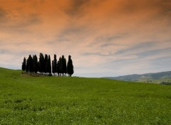 Fonds d'�cran Voyages : Europe Cipressi - Toscana