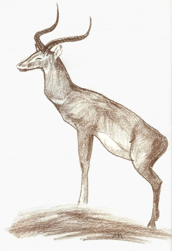 Fonds d'�cran Art - Crayon Animaux - Antilopes Impala