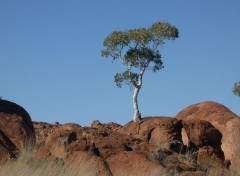 Wallpapers Trips : Oceania Arbre