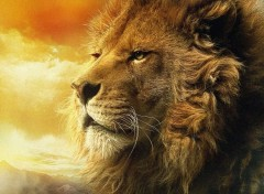 Wallpapers Animals King Leo