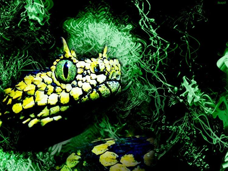 fond d'ecraan de serpent 070512123135_83