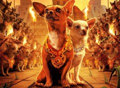 Wallpapers Movies Le-Chihuahua-de-Beverly-Hil