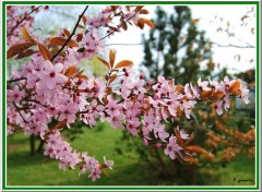 Fonds d'�cran Nature Salut printemps