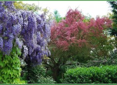 Fonds d'�cran Nature Jardin de Printemps