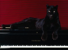 Fonds d'�cran Animaux panther on piano