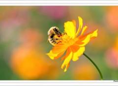 Fonds d'�cran Animaux Pollen-III