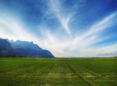 Fonds d'�cran Nature Lignes Vertes