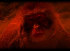 Fonds d'�cran Art - Num�rique monkey of darckness