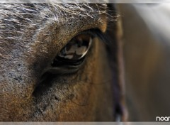 Fonds d'�cran Animaux Horses Eye