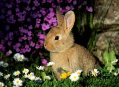 Fonds d'�cran Animaux Rabbit Among Flowers