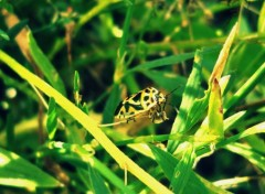 Wallpapers Animals Un insecte 2