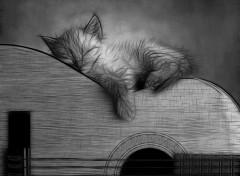 Fonds d'�cran Animaux Chaton Guitariste