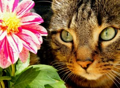 Fonds d'�cran Animaux flower and cat