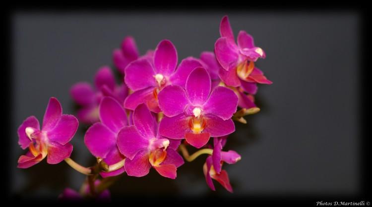 Musique Films Orchidee Fond...