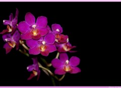 Fonds d'�cran Nature Orchidee