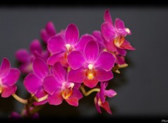 Fonds d'�cran Nature Orchidee bis