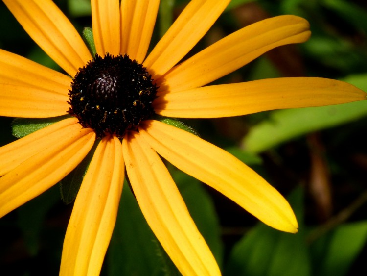 Fonds d 39 cran nature fonds d 39 cran fleurs fleur d 39 t for Fond ecran ete fleurs