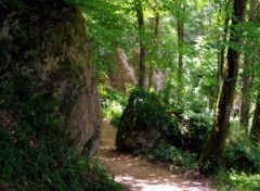 Fonds d'�cran Nature sentier forestier