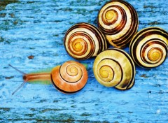 Wallpapers Animals Escargots