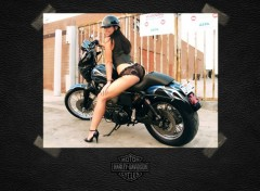 Fonds d'�cran Motos H-D Dyna sexy girl