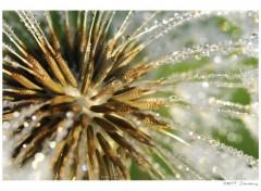 Fonds d'�cran Nature Macro fleur .2