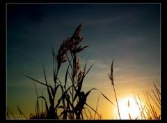 Fonds d'�cran Nature Image sans titre N�287447