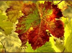 Wallpapers Nature Automne dans la vigne 2