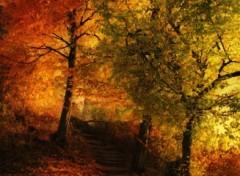 Fonds d'�cran Art - Num�rique Impressions d'automne.