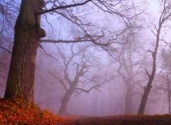 Fonds d'�cran Nature Un �pais brouillard 3.