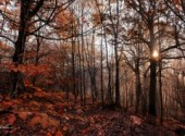 Fonds d'�cran Nature Sun Through The Forest