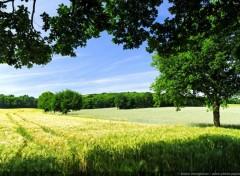 Nature Paysage de campagne