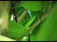 Animaux Greensnake
