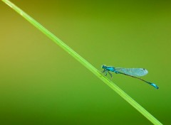 Animaux miss dragonfly