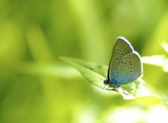  Animaux Small Blue