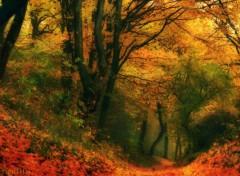 Nature Impressions d'automne 2012-5-de feu for�t.