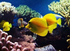 Animaux Under the sea