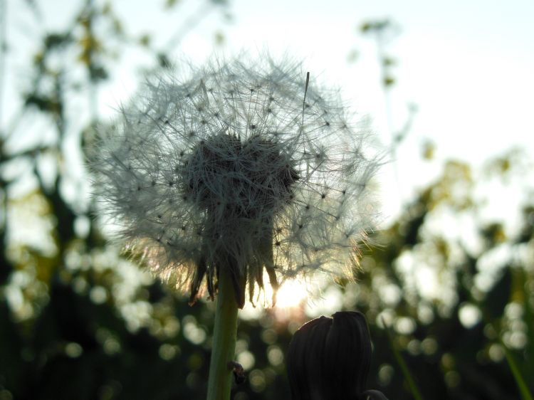 Fonds d'écran Nature Fleurs Balade en pleine nature.