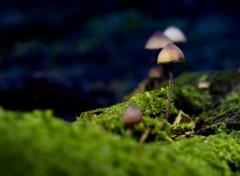 Nature Petits champignons sauvages. 1