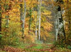 Nature Perdu au milieu des bois