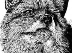 Art - Crayon fox
